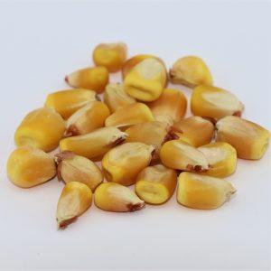 Reid's Yellow Dent Corn – 50 lb bag