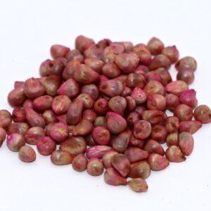 Hybrid Pearl Millet – 50 lb bag