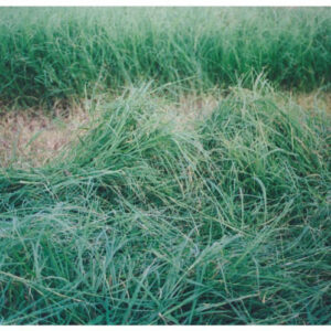 SunGrazer Plus Forage Bermudagrass Blend – 25 lb bag