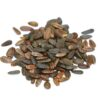 Native Sunflower Seed