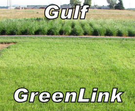 GreenLink Turf-Type Annual Ryegrass – 50 lb bag