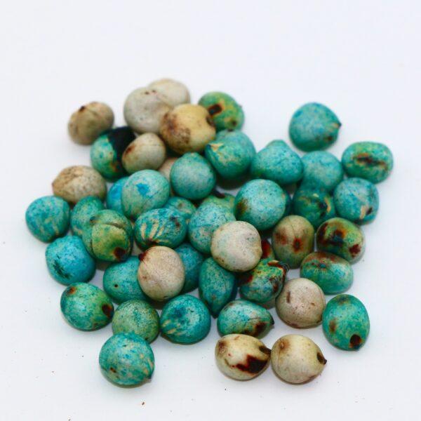 Hegari seed (treated)