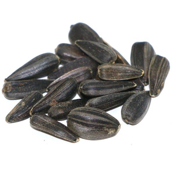 Peredovik Sunflower Seed
